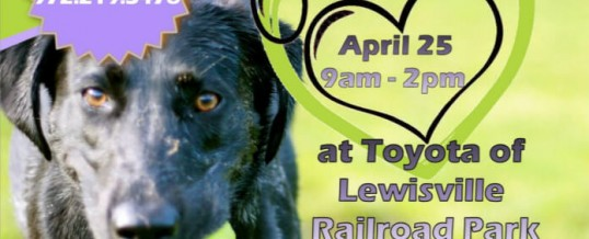 Paws in the park – Railroad Park Lewisville
